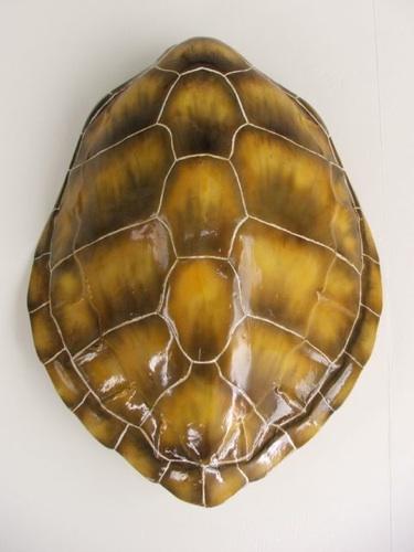 turtle shell back brace - 375×500